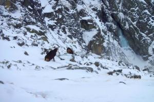 Ľad pri Velickej próbe (15.1.2016)